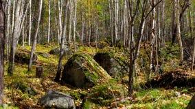 A queda das folhas na floresta do outono video estoque