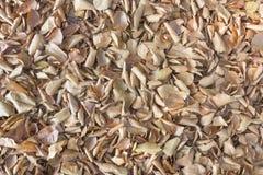 Queda das folhas, textura do fundo do outono Fotografia de Stock