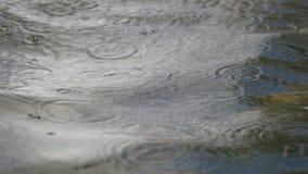 Queda das gotas da chuva na superfície da água vídeos de arquivo