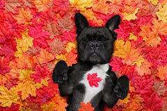 A queda de Autmn deixa o cão fotos de stock
