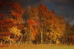 Queda de Colorfull Fotografia de Stock