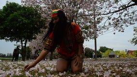 Queda de jogo e de jogo da mulher tailandesa da flor na terra do rosea de Tabebuia ou da árvore de trombeta rosado no jardim video estoque