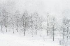 Queda de neve Fotografia de Stock