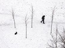 Queda de neve abundante Fotos de Stock