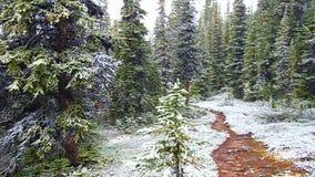 Queda de neve adiantada Jasper National Park video estoque