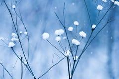 Queda de neve azul Imagem de Stock