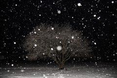 A queda de neve, blizzard, flocos da neve, árvore do inverno cobriu a neve na noite Paisagem bonita do minimalismo imagem de stock