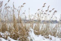 Queda de neve bonita Paisagem do inverno Imagens de Stock Royalty Free