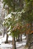 Queda de neve clara e ramos nevado Imagens de Stock