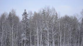 Queda de neve clara sobre o fundo diverso da floresta no círculo ártico vídeos de arquivo