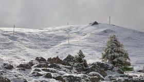 Queda de neve da manhã Fotos de Stock