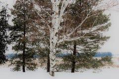 Queda de neve do país de dezembro em campos de Michigan Imagens de Stock Royalty Free