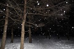 Queda de neve, flocos de neve na foto instantânea da floresta do inverno da noite imagem de stock