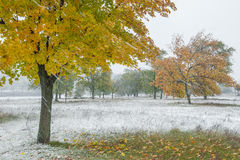 Queda de neve forte do outono fotografia de stock royalty free