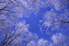 Queda de neve fresca em Illinois imagem de stock