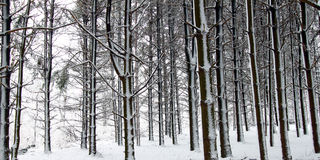 Queda de neve fresca em Illinois Fotos de Stock