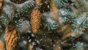Queda de neve macia na floresta nevado do inverno, nivelando a paisagem do inverno, ramo do abeto vermelho na neve vídeos de arquivo