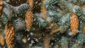 Queda de neve macia na floresta nevado do inverno, nivelando a paisagem do inverno, ramo do abeto vermelho na neve filme