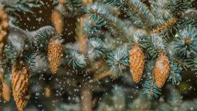 Queda de neve macia na floresta nevado do inverno, nivelando a paisagem do inverno, ramo na neve, laço video do abeto vermelho filme