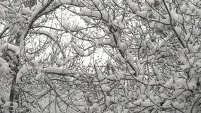 Queda de neve na floresta video estoque