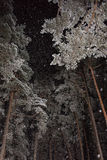 Queda de neve na floresta do pinho da noite Fotos de Stock