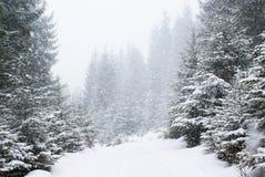 Queda de neve na floresta nevado densa do abeto na estrada Fotografia de Stock