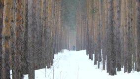 Queda de neve no inverno na floresta, esqui do paizinho e da filha na floresta video estoque