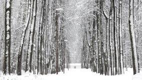 Queda de neve no inverno na floresta, manhã de Natal nevado macia com neve de queda filme