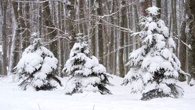 Queda de neve no inverno na floresta, manhã de Natal nevado macia com neve de queda vídeos de arquivo