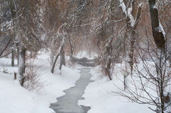Queda de neve no parque Imagem de Stock Royalty Free
