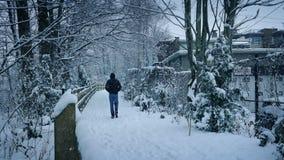 Queda de neve de Person Walks On Path In vídeos de arquivo