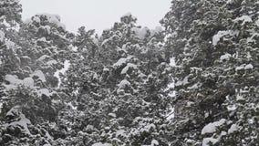 Queda de neve pesada video estoque