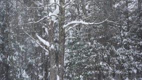 Queda de neve vertical na árvore coberta líquene video estoque