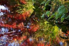 A queda de Van Dusen Jardim colore reflexões da água foto de stock