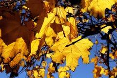 A queda deixa a folha das cores do outono e o fundo das árvores Foto de Stock Royalty Free