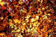 A queda deixa o fundo france da folha das cores do outono Imagens de Stock