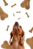 Queda do alimento para cães Foto de Stock