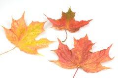 Queda do outono Foto de Stock Royalty Free