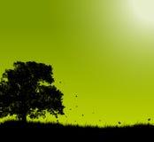 Queda do outono Imagem de Stock