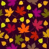 Queda do outono Teste padrão sem emenda do vetor com vidoeiro branco e folhas de bordo ilustração royalty free