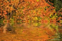 Queda do rio Imagens de Stock Royalty Free