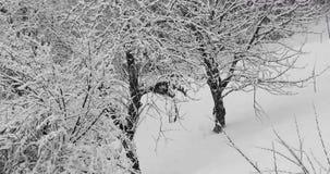 Queda dos flocos de neve do inverno video estoque