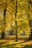 Queda dourada Imagens de Stock