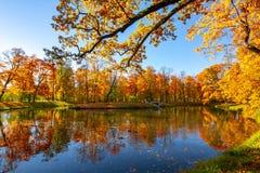 Queda dourada do outono no parque de Alexander, Tsarskoe Selo Pushkin St Petersburg, Rússia foto de stock royalty free