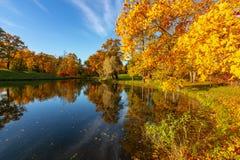 Queda dourada do outono no parque de Alexander, Tsarskoe Selo Pushkin St Petersburg, Rússia fotos de stock royalty free