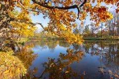 Queda dourada do outono no parque de Alexander, Tsarskoe Selo Pushkin St Petersburg, Rússia imagem de stock