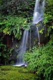 Queda em Eden Fotos de Stock Royalty Free