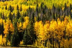 Queda em Steamboat Springs Colorado Imagem de Stock Royalty Free