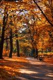 Queda em um parque Fotos de Stock Royalty Free
