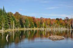 Queda em uma lagoa do castor de Adirondack Fotos de Stock Royalty Free